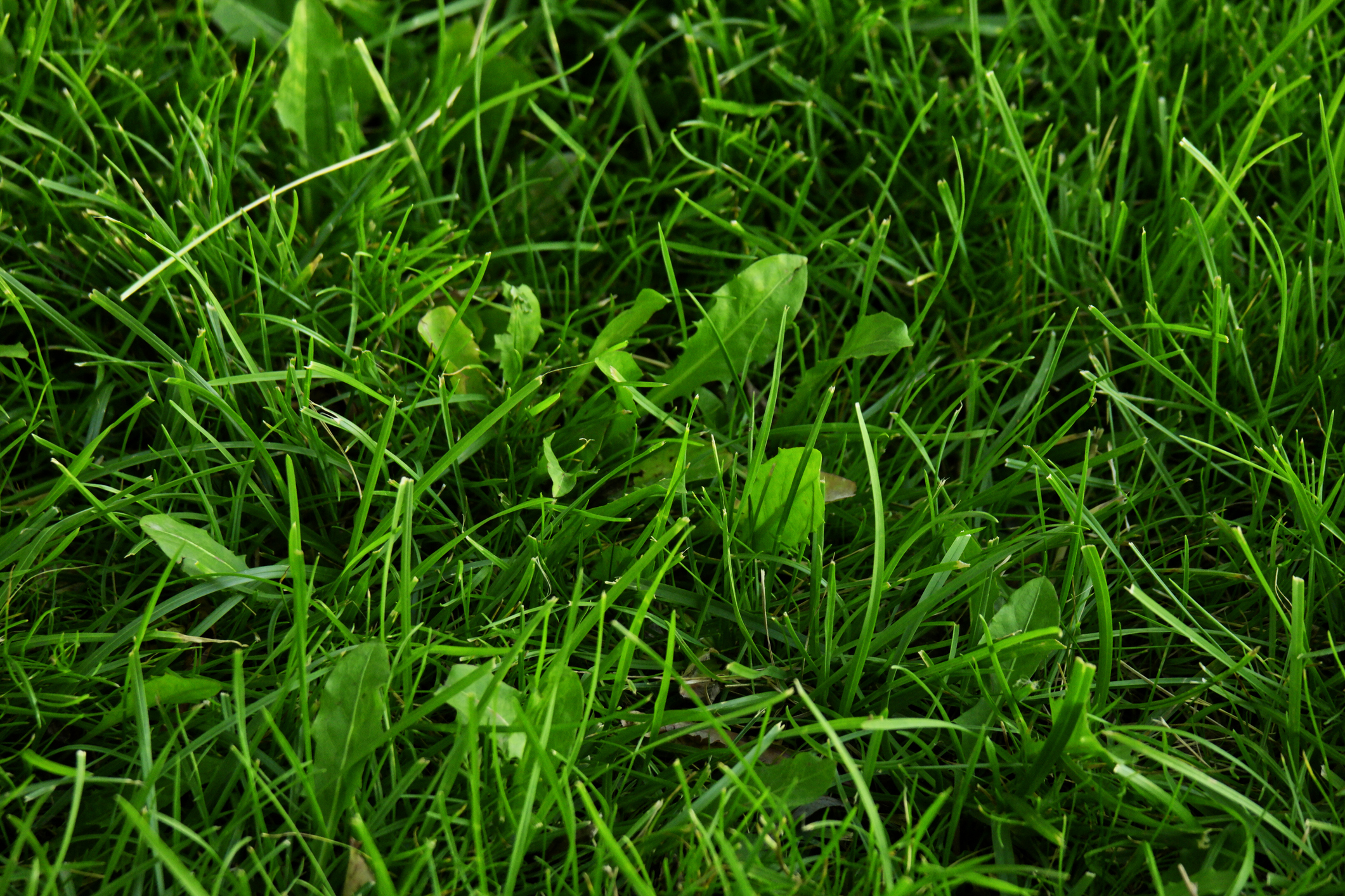 Lawn Turf Treatment | Integrity First Lawn Care